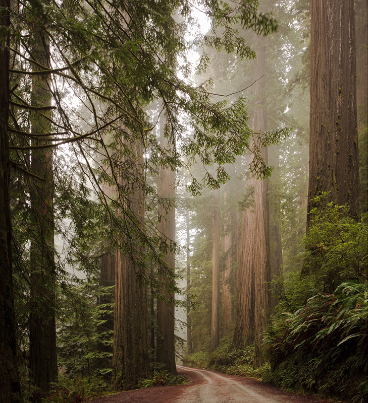 030911_js_redwoods_003