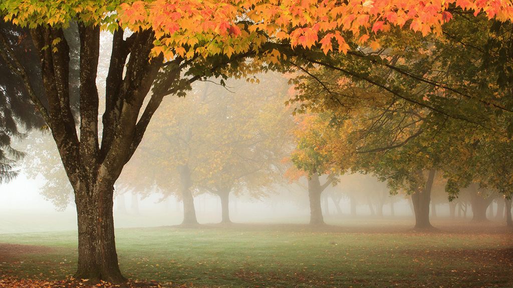 Fall Color and Morning Fog