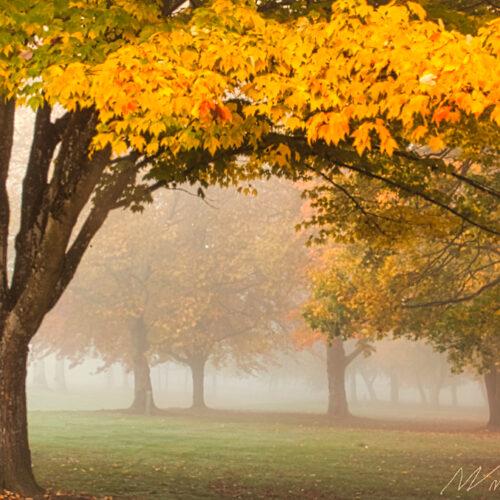 Foggy Fall Morning  Springfield. Oregon